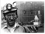Canary in Coal Mine in Cage