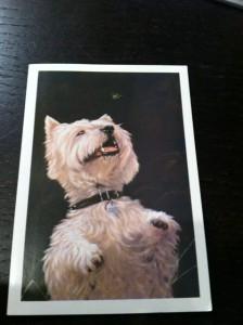 Highlands Pet Hospital Thank You Card