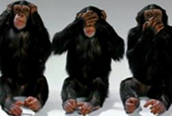 monkey_copy.png