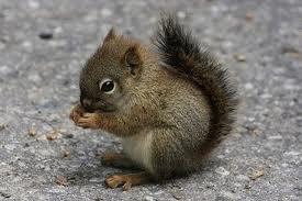 squirrel, nut, acorn.jpg