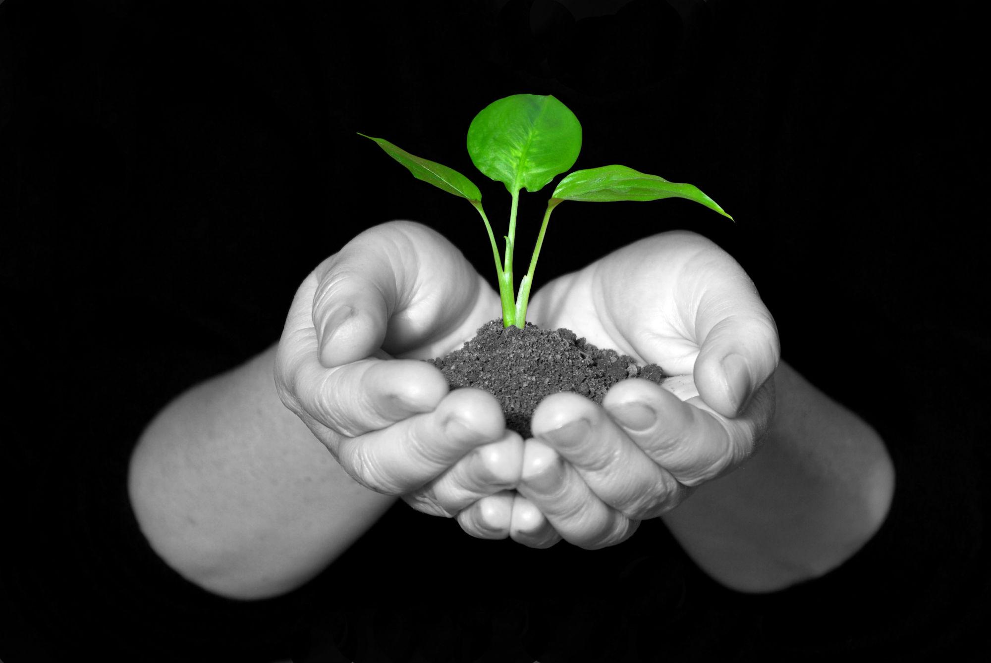 plant growing from hands, nurturing.jpg